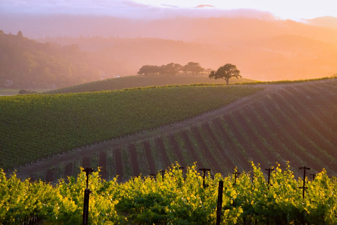 The Napa Valley: Harvest Season and Beyond -